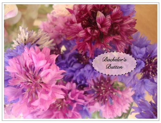 flowers 2 blog