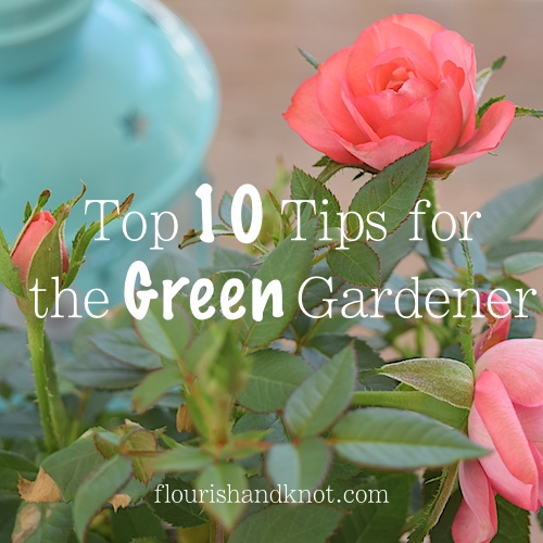 Top 10 Tips for the